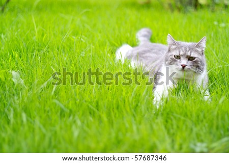A cute cat relaxing on the grass in the garden