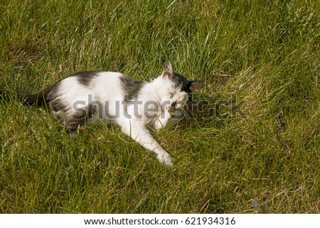 a cute cat relaxing on the...