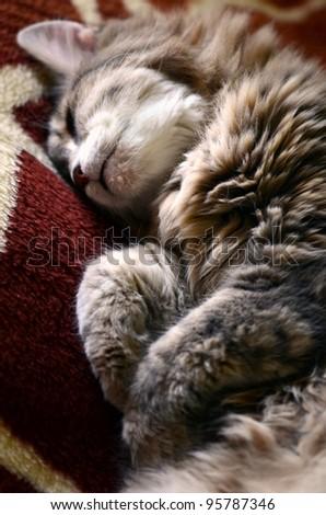 a cute cat sleeping