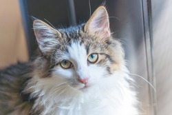 A cute cat staring at the camera.