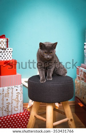 A cute cat with christmas presents