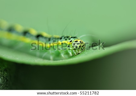 cute caterpillar cartoon. a cute caterpillar on leaf