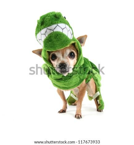 a cute chihuahua dressed up as a dinosaur