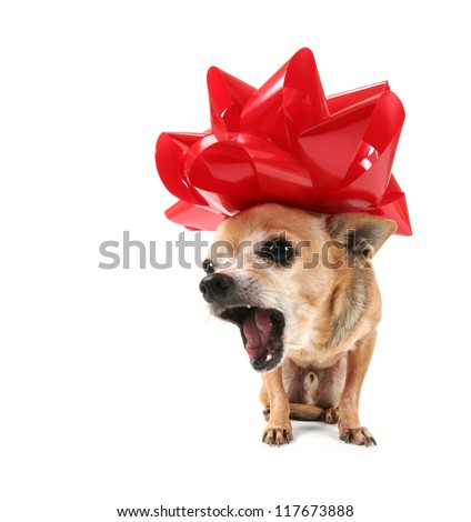 a cute chihuahua dressed up for christmas