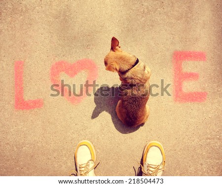 a cute chihuahua sitting in the word love on a sidewalk toned with a retro vintage instagram filter effect