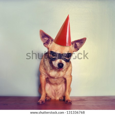 a cute chihuahua with a mask on