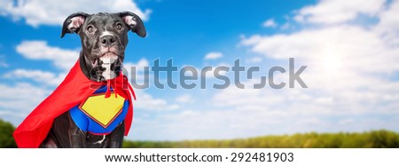 A cute crossbreed dog wearing a super hero costume in a field with blue sky and trees in the background