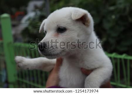 a cute dog #1254173974