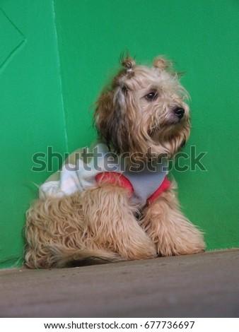 a cute dog  Photo stock ©