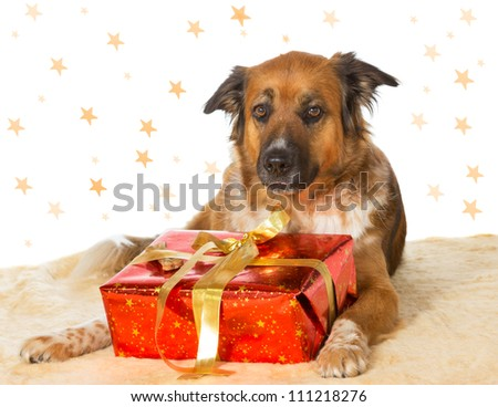 A cute dog lying on the floor with a decorative red Christmas gift between its paws and a starry backdrop with copyspace for your seasonal greeting