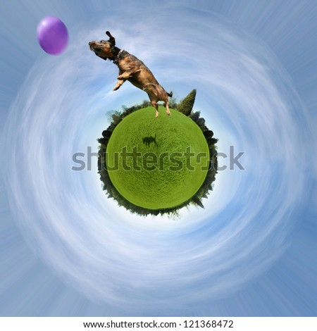a cute dog on a green sphere jumping at a ball