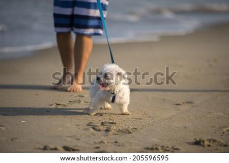 A cute Dog running on the Beach