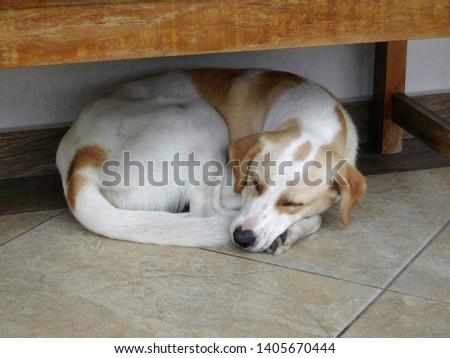 A cute dog sleeping under the bench, near Curitiba in southern Brazil. #1405670444