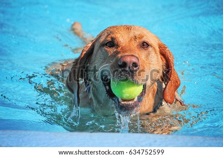 a cute dog swimming in a public pool and having a good time during the summer vacation holiday #634752599