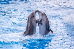 a cute dolphins during a speech at the dolphinarium.