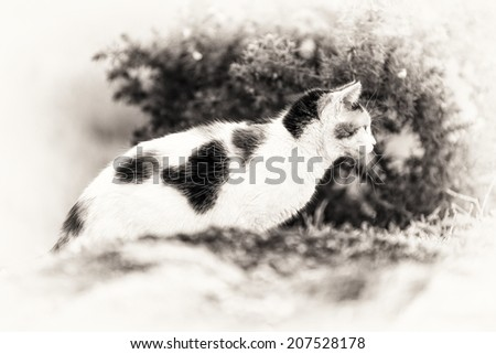 A cute domestic cat on the rock is staring at something right side. Black and white fine art outdoors portrait of mixed-breed cat.