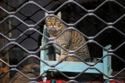 A cute domestic cat with green eyes sitting in closed shop window of an antique store, posing behind glass and grille, looking outside and attracting buyers attention.