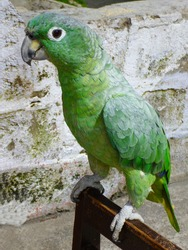 A cute figure of a colorful green parrot staring at you