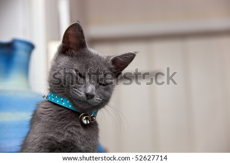 A cute grey kitten looking sleepy as he awakes from his cat-nap. Copyspace for your text/design.