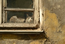 A cute homeless cat lies behind a dirty glass window located on a peeling, cracked stone wall of an old house.
