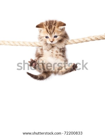 a cute kitten is climbing on the rope. isolated on a white background - stock photo