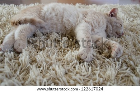a cute kitten laying on carpet