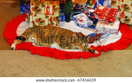 A cute kitty cat under the Christmas tree with the presents and keeping a watchful eye out for Santa using a shallow depth of field and selective focus with room for your text.