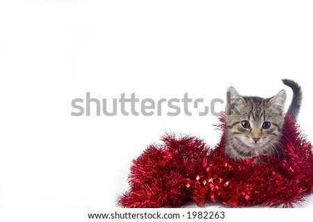 A cute kitty playing in holiday garland. White space suitable for holiday cards and designs.