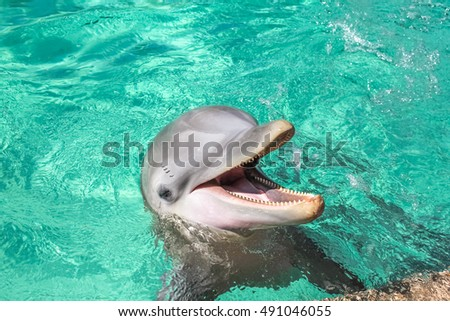 a cute laughing dolphin in the...