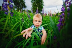 A cute little boy poses on a beautiful summer background of wild lupine flowers. The terrified toddler reaches for the photographer. Artistic bokeh.