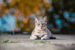A cute little gray cat. Lying on the cement floor, bokeh background
