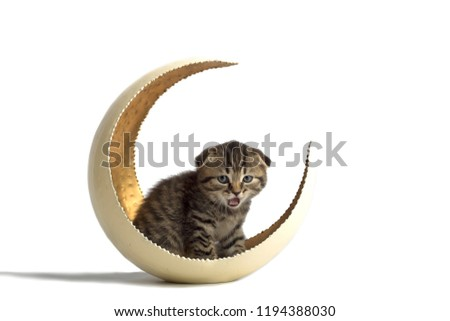 A cute little gray kitten sits in a vase in the shape of a moon. on a white background. studio photo #1194388030