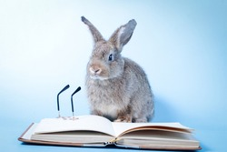 A cute little gray rabbit is reading a book and has a small pair of glasses nearby. On a blue background. Educational concept. Vertebrates are mammals