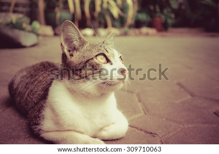 A cute little kitten cat pet is looking at the sky with blank space on the right in vintage retro color style