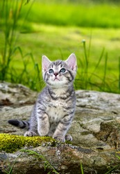 a cute little kitten in the garden grass