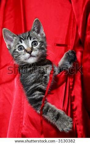 A cute, little tabby kitten rides in the pocket of a red silk robe.