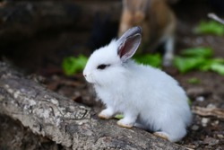 A cute little white rabbit is sitting on a log.