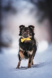 A cute mixed breed dog in a yellow bow standing on a snowy path against the backdrop of a winter fairy forest. Paw in the air