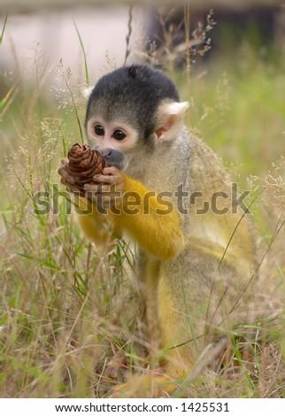 A cute monkey  holding its treasure