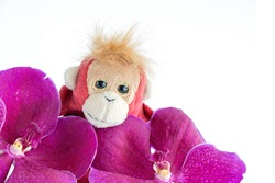 A cute monkey is standing with a fresh orchid flowers