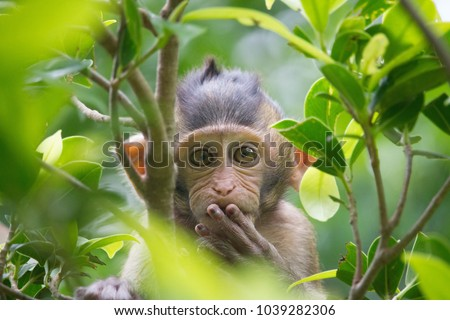 A cute monkey lives in a natural forest of Thailand.  - Shutterstock ID 1039282306
