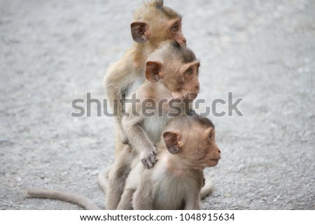 A cute monkey lives in a natural forest of Thailand.  #1048915634