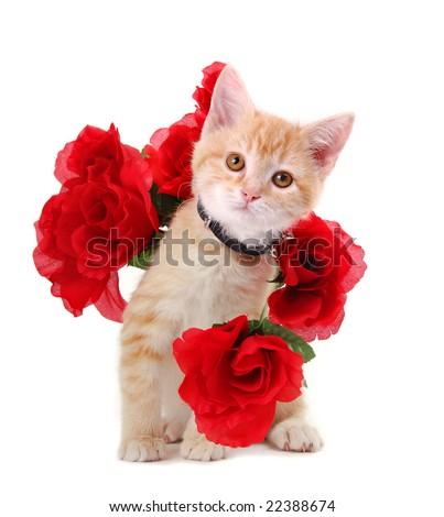 A cute orange tabby kitten surrounded by roses.