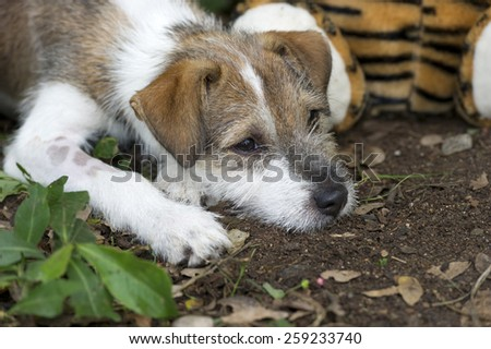 A cute puppy with a sad face laying down on its paws.