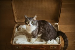 A cute sad stray cat sits in an old brown suitcase and looks with the hope that it will be taken to a new home.