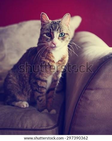 a cute small cat or kitten...