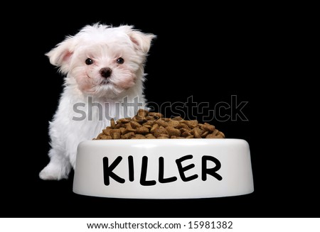 A cute small dog with a large bowl of food