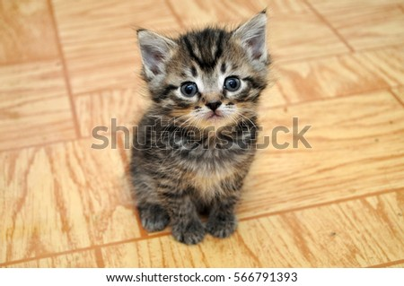 a cute small kitten looking at...