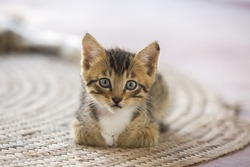 a cute small kitten looking at the camera sitting lying on mat