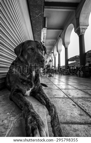 A cute stray dog relaxing in front of a closed store at Aristotelous square of Thessaloniki, in black and white.